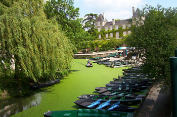 Vendee images - Arcais on the green Venice